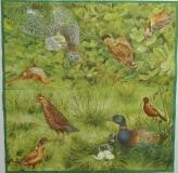 Ubrousek ptáci - ptačí říše