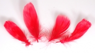Husí peříčka červená - 4 ks