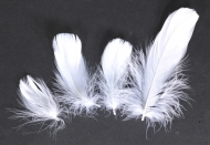 Husí peříčka bílá - 4 ks