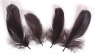 Husí peříčka černá - 4 ks