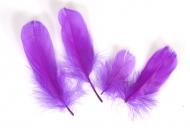 Husí peříčka fialová - 4 ks