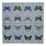 Ubrousek brouci a motýli - velcí motýli