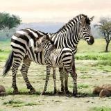 Ubrousek 33x33 - Zebra s mládětem