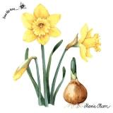 Ubrousek 33x33 - Narcis