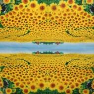Ubrousek květiny - slunečnicové pole