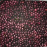 Ubrousek plody - borůvky