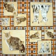 Ubrousek zvířata - kočky