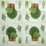 Ubrousek rostliny - bylinky v květináči na bílém