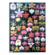 Papíry na decoupage - orchidej