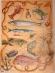 Papíry na decoupage - ryby