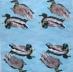 Ubrousek ptáci - kachny