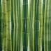 Ubrousek rostliny - bambus