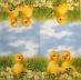 Ubrousek velikonoční - kačenky v sedmikráskách